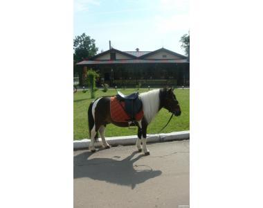 Продам відмінного шетлендского поні