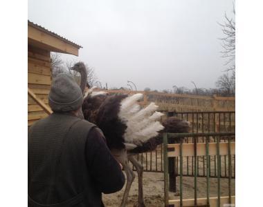 Для тих, хто цікавиться страусами