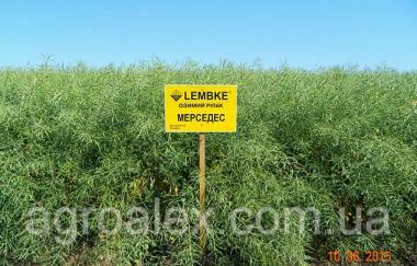 Мерседес насіння озимого ріпаку Lembke