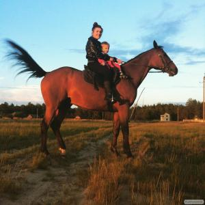 Продается лошадь Тракененской породы.