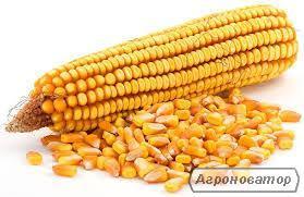 Продам собственную кукурузу с хозяйств Харьковская обл