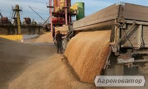 Перевалка зерна в Харкові
