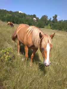Продам 2-х лошадей тяжеловозов.