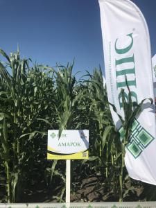 Семена кукурузы ВНИС скидка 10% от производителя
