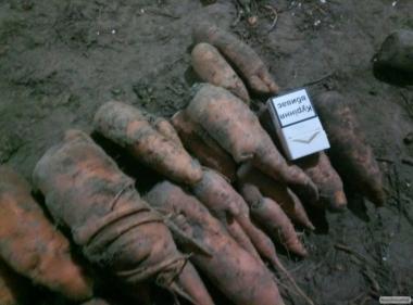 Продам морковь столовую 2 сорта на переработку.