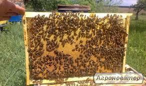 Продам бджолосім'ї на дадановской рамці (Київська область)