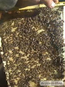 Продам бджолопакети 4рамки,карпатської бджоли