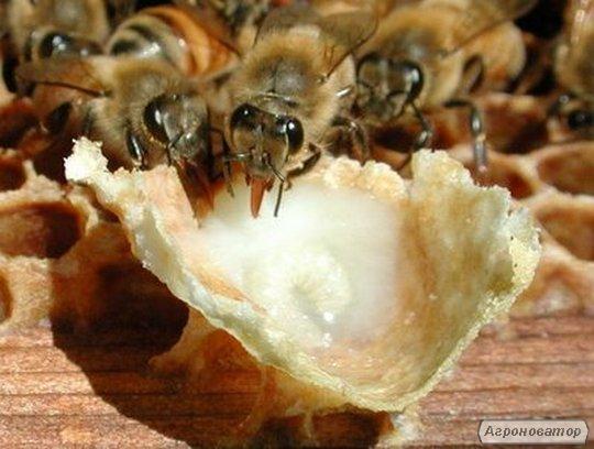 Маточное молочко пчелиное натуральное. Доставка по Украине.