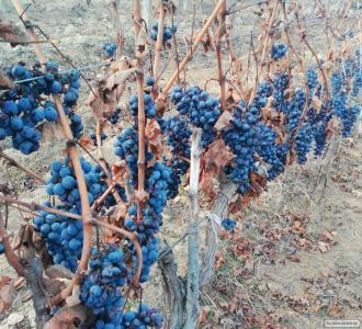 Натуральное домашнее вино Каберне.