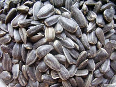 Семечка масличная 48% оптом  от 1 тонны с элеватора