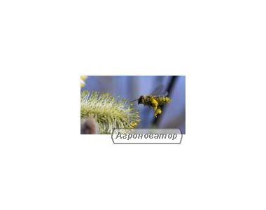 Продам бджолопакети, бджолосім'ї