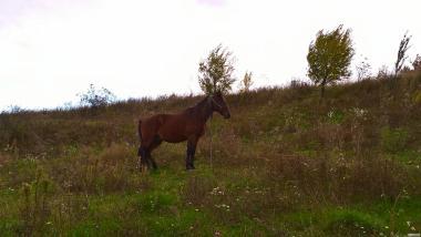 Продам робочого коня