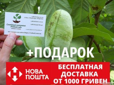 Азимина семена Asimina triloba (10шт) косточки, семечки для саженцев