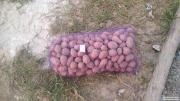 продам картоплю 3,5грн/кг від 3 сіток безкоштовна доставка по Києві