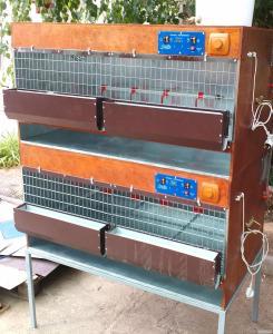 Професійний брудер для птиці -Автомат. Клітки для перепелів та курей