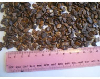 Посевной материал семян арбуза