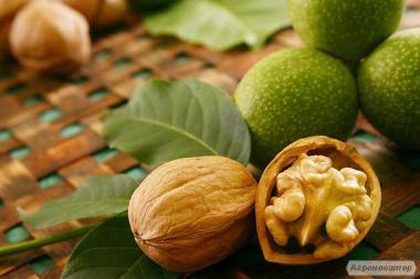 Продаем грецкие орехи. Ядро и кругляк.