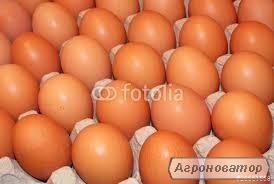 Инкубационное яйцо
