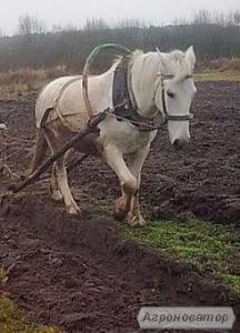Терміново продам коня
