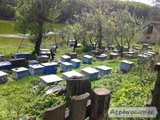 Отводки, Пчелосемьи, Бджоли, Бджолосім'ї, Бджолопакети
