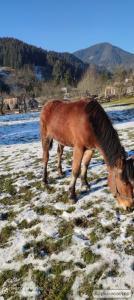 Продаться кобила