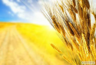 Закупівля зернових, зерновідходів