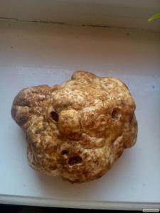 трюфель білий(серце гриб)
