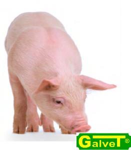 Премікси для свиней