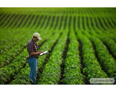 Соя семена. Семена сои РАУНДАП -R Лидеры селекции под глифосат