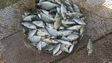 товарная живая рыба и зарыбок