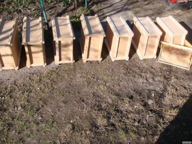 Продам пчелопакеты, семьи, Карника, Карпатка с 15 марта 2020 года