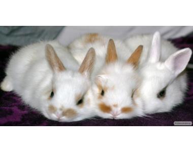 Продам декоративных кроликов беленьких и пушистых