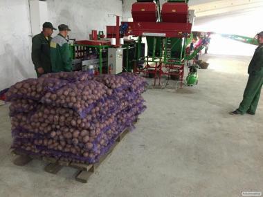 """ТОВ""""ОЛКАР""""продає картоплю 5+,оптом і великим оптом,"""