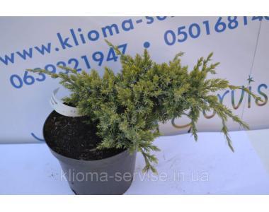 Можжевельник чешуйчатый Holder D 30-40-70 (C2)