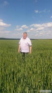 Высокоурожайная пшеница, сорт Сталева, до 100 ц/га