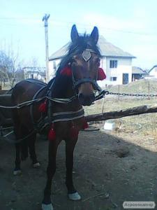 продам кобилу