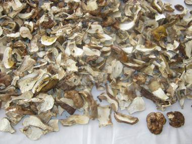 Продам белые грибы.