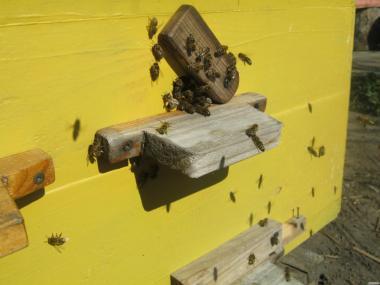 Продам пчел, пчелосемьи, пчелы, пчелосемьи
