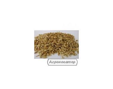 Продам тверду пшеницю