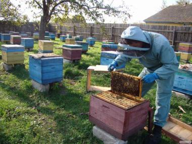 Продам 100 пчелосемей с ульями