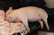 "КомбиКорм ""Тесто+3масла"".Протеина масса.Рыба и свинья растут класно"