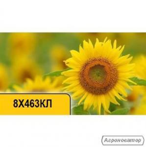 Насіння соняшнику 8Х463КЛ