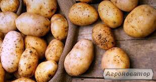 Продажа крупным оптом картофеля