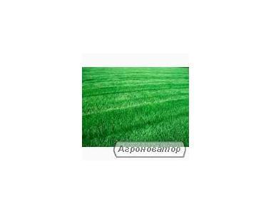 Продам семена Райграса ,( пажитниці) урожай 2014р
