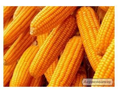 Продам 2000т кукурузы