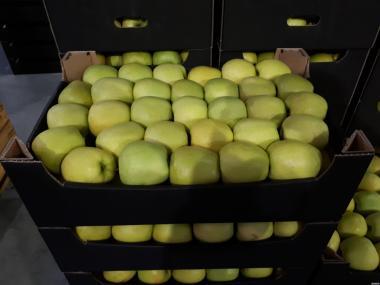 Продаєм яблука у великій кількості різних сортів.