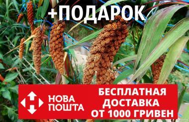 Чумиза семена (20 грамм, около 4000 шт) головчатое просо, чёрный рис