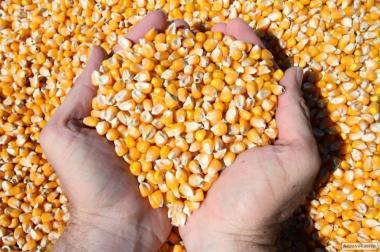 продам суху кукурудзу
