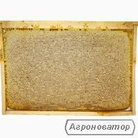 Пчелопакеты Карпатской породы. 2020г. Черновицкая обл