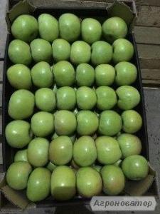 Яблоки оптом от производителя